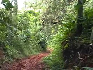 I found this jungle path while