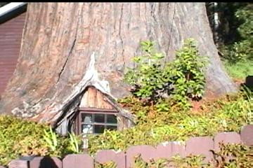 Giant redwood tree house on Route 101